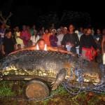 Le plus grand crocodile du monde